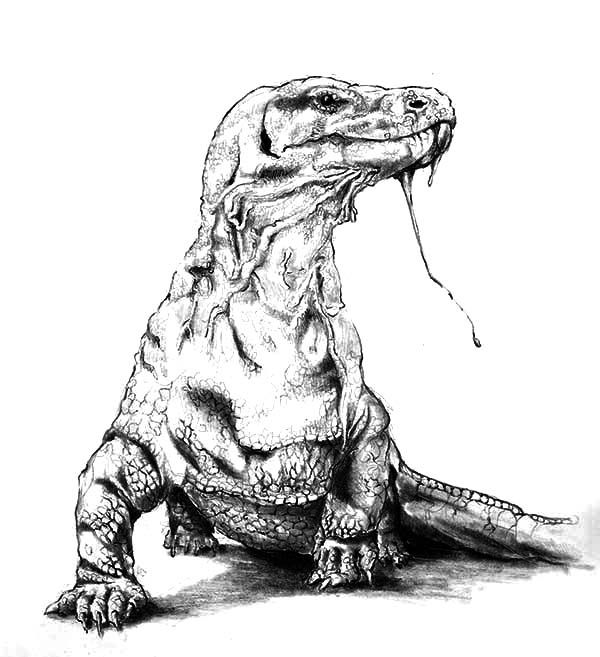 Komodo Dragon Poisonous Saliva Coloring Pages Download Print Online Coloring Pages For Free Color Nimbus Komodo Dragon Dragon Coloring Page Komodo