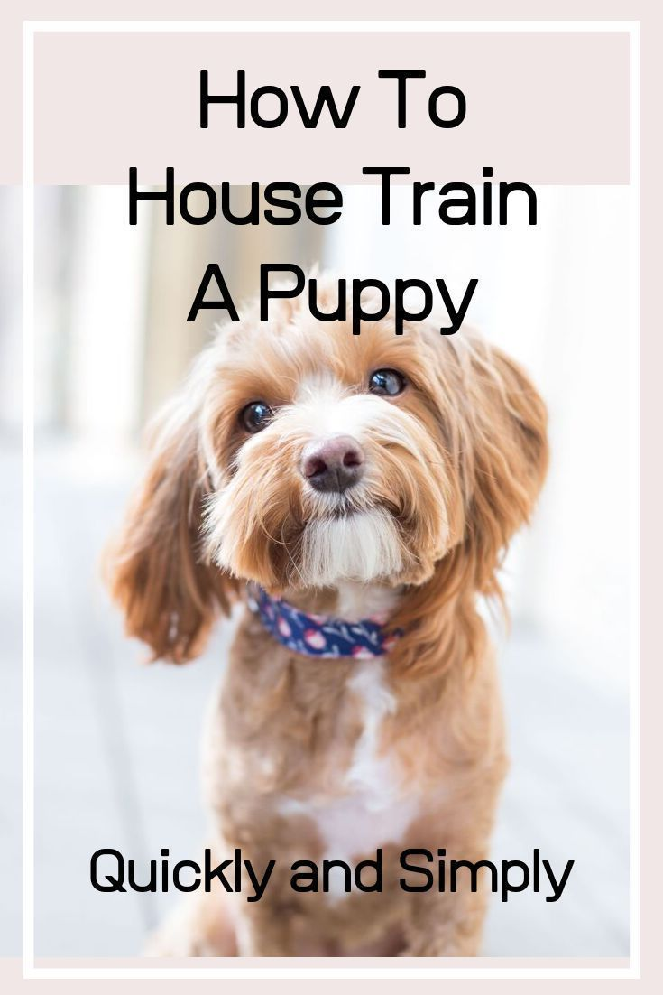 How To House Train A Puppy Quickly And Simply Puppy Toilet