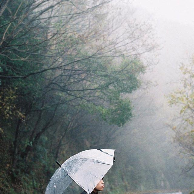 【watashi_16】さんのInstagramをピンしています。 《. 雨音が心地よい朝です . . . #film#filmcamera#filmphotography  #35mm#35mmfilm#35mmcamera  #フィルム#フィルムカメラ#フィルム写真 #フィルムに恋してる#フィルム写真普及委員会  #indies_gram#instagramjapan #reco_ig  #team_jp_ #team_jp_西 #香川県#香川 #庵治町#森#雨#霧#傘 #写真好きな人と繋がりたい  #ファインダー越しの私の世界》