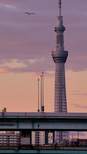 Tokyo Skytree (東京スカイツリー) Japan