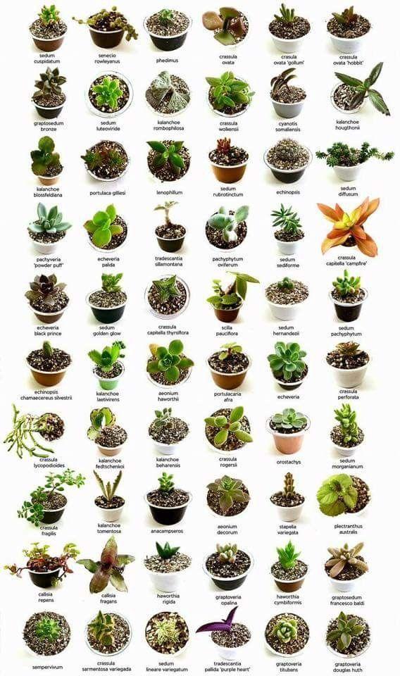 Identifying succulents