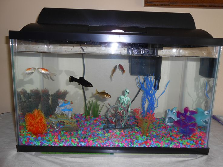 10 Gallon fish tank example. | Fish Tanks to Admire/Ideas ... 10 Gallon Fish Tank Ideas