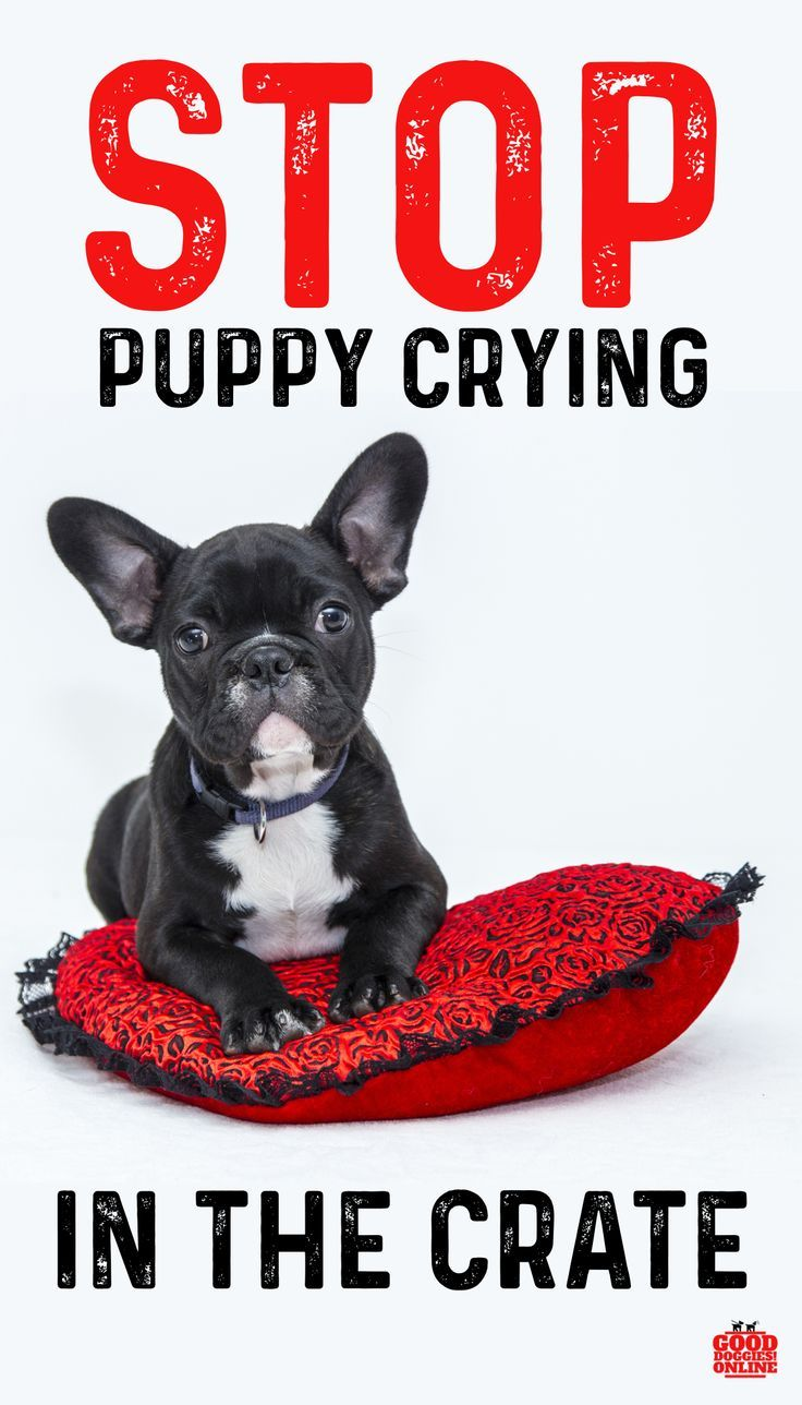 5 Ways To Stop Your Puppy From Crying In Crate Dogs And Puppies