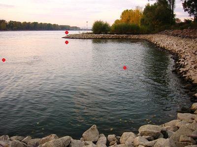 Zanderangeln, Tipps zum Angeln von Zander mit Gummifisch und Twister Montagen an Buhnen und Strömung am Rhein, Fangzeit und Stellen zum Spinnfischen