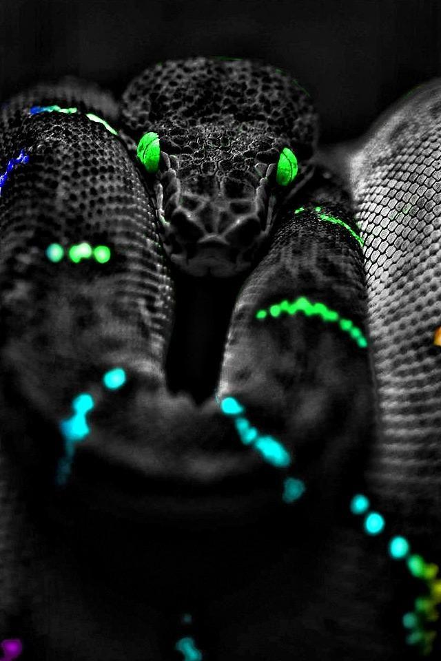 Best 25+ Snake wallpaper ideas on Pinterest | Snake drawing, Skeleton and Macabre art
