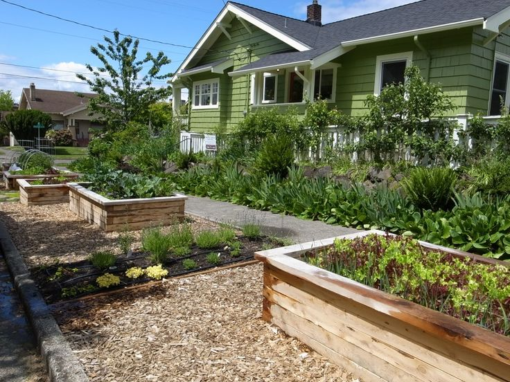 raised beds in parking strip