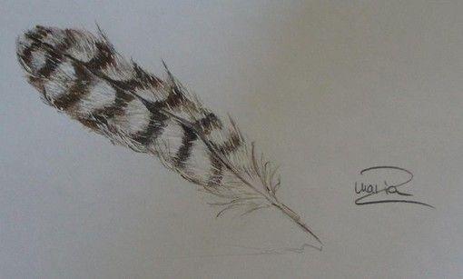 Feder, Zeichnung
