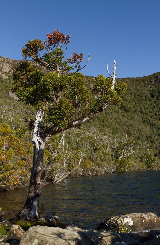 11 best hartz national park images on pinterest