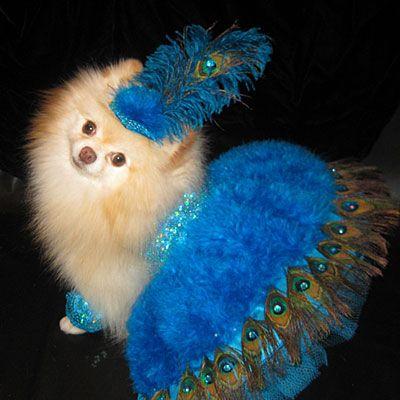 Dog Halloween Costume Ideas   Dog Halloween Costume: Las Vegas Showgirl