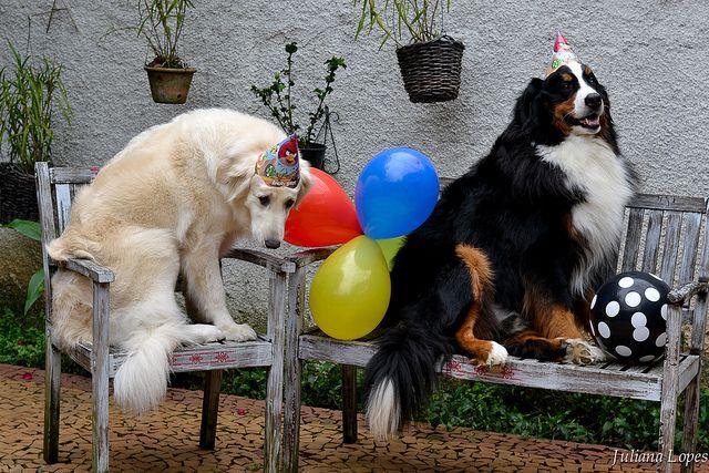 Best 25+ Birthday Meme Dog Ideas On Pinterest