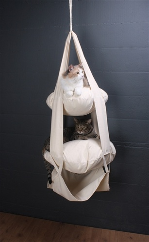 The Cats Trapeze - Mopetlife.com