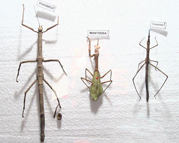 MUSEU HISTORIA NATURAL – CURITIBA – 20/06/13 – Museu de historia natural de Curitiba, acervo de especies da fauna terrestre contem animais ameacados de extincao. FOTO: Felipe Rosa