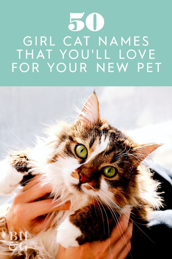 50 Girl Cat Names That You Ll Love For Your New Pet In 2020 Girl Cat Names Cat Names Female Cat Names Unique