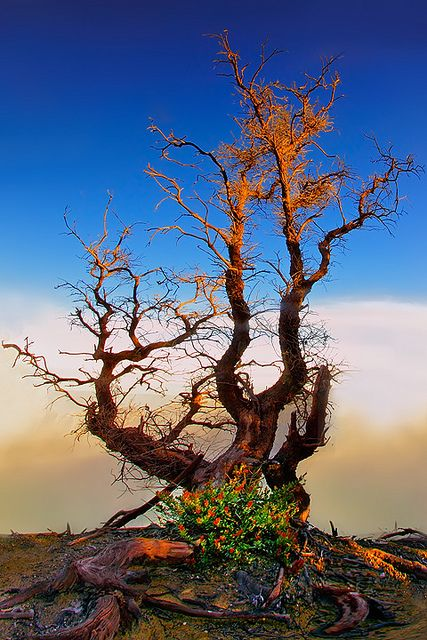 The Last Wood by tropicaLiving - Jessy Eykendorp, via Flickr; Kawah Ijen Crater, East Java, Indonesia