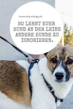 Wie lernt mein Hund andere Hunde zu ignorieren?-mit Leine