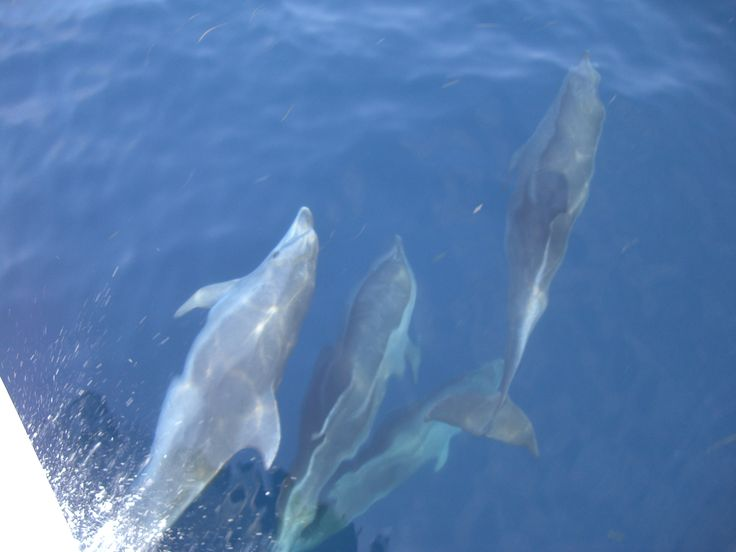 dolphins only live to crystal clear waters!
