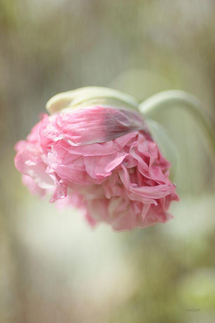 Poppy flower stake garden art poppy strong metal yard art flower - Ethereal Bloom For The Garden