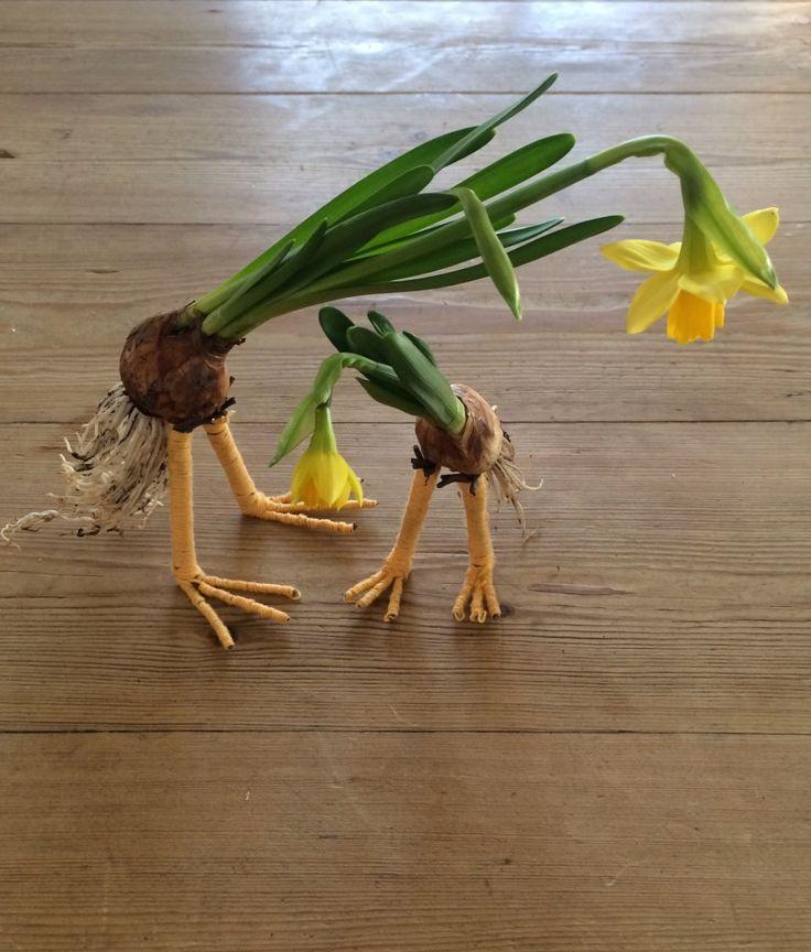 Påskelilje som påskekylling - Maja Maagaard