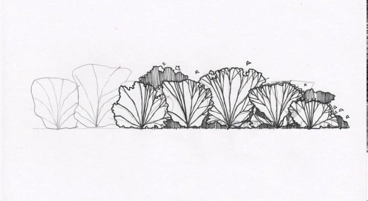 Landscape Drawing: Basic 31 Shrub Elevation 01 | LandscapeArchitecture.TV | Landscape Architecture Videos