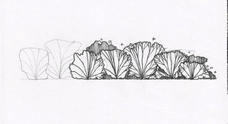 Landscape Drawing: Basic 31 Shrub Elevation 01 | LandscapeArchitecture.TV | Landscape Architecture Videos