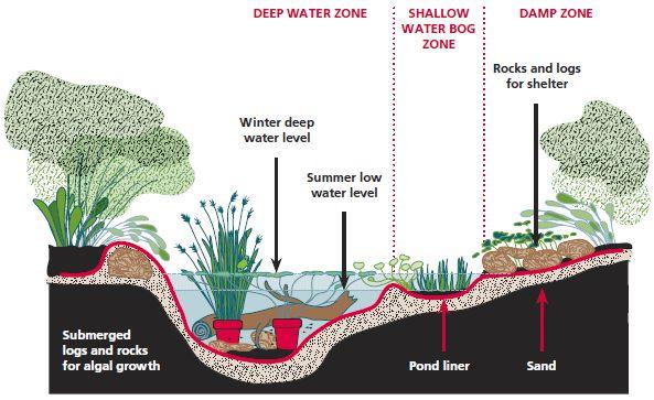 All the Dirt on Gardening: Backyard Wetland - It's a Bog, A Quaking Bog, A Swamp, A Fen, A Marsh!