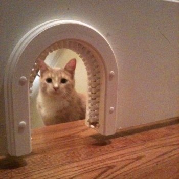 10 Best Cat Flap Images On Pinterest Cat Stuff My House And Cat Room