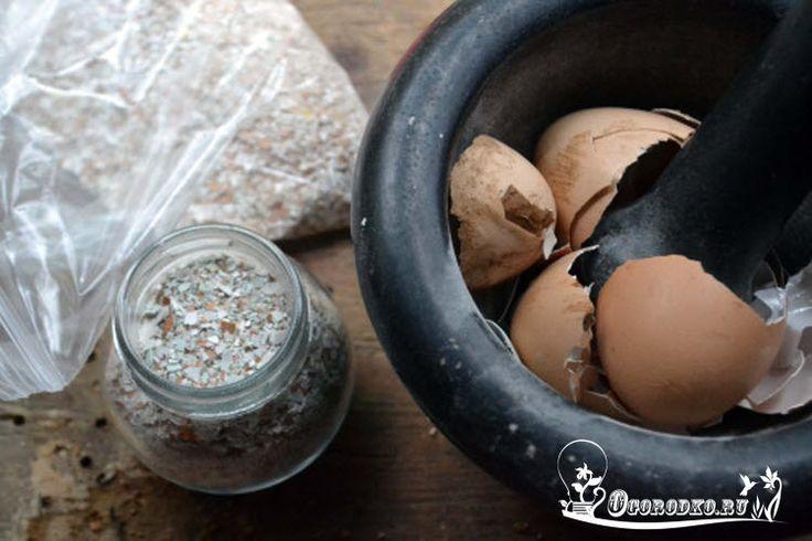 Яичная скорлупа как удобрение для огорода, комнатных цветов, польза для почвы и растений, в качестве удобрения для рассады, как правильно приготовить и использовать