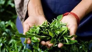 tea wholesalers australia