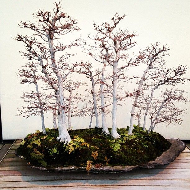Autumn Bonsai Forest.I love bonsai trees.Please check out my website thanks. www.photopix.co.nz