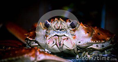 Crab waiting when cooked. Kamchatka