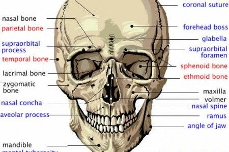 evolution may get turned on its skull (video) science standards, Human Body