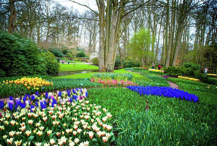 Floral Carpet Of Keukenhof Garden Photograph by Jenny Rainbow