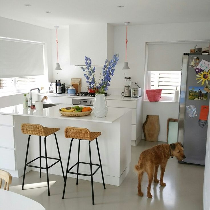 Kitchen with our sweet Irish terrier Juultje