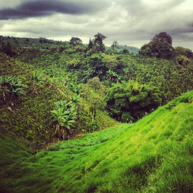 Eje Cafetero - Coffee Fields