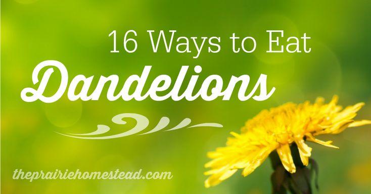 16 Dandelion Recipes | The Prairie Homestead - Hmm always heard of dandelion tea but never any other ways