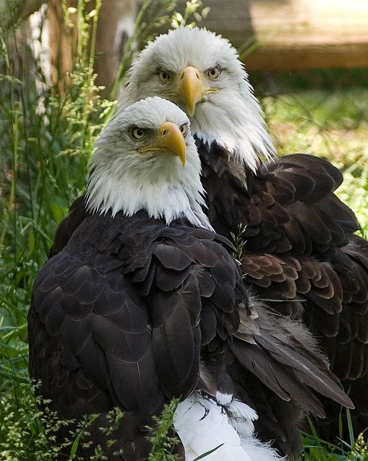 Two Eagles by Michael Richards on 500px