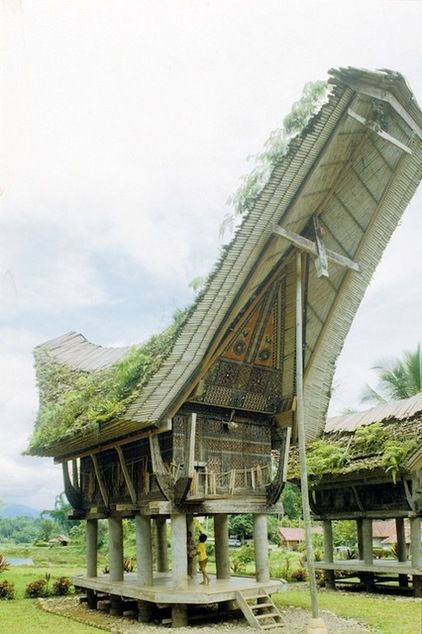 Indonesian dwelling 1. People of the Batak Toba and Toraja tribes, living on the islands of Sumatra and Sulawesi, live in villages composed of many of these boat-like houses.