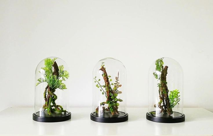 """Have we reached """"peak terrarium?"""" A few years back—prior to 2012, say—terrariums were niche. (That's a nice way of saying nerdy.) They were possibly someth"""