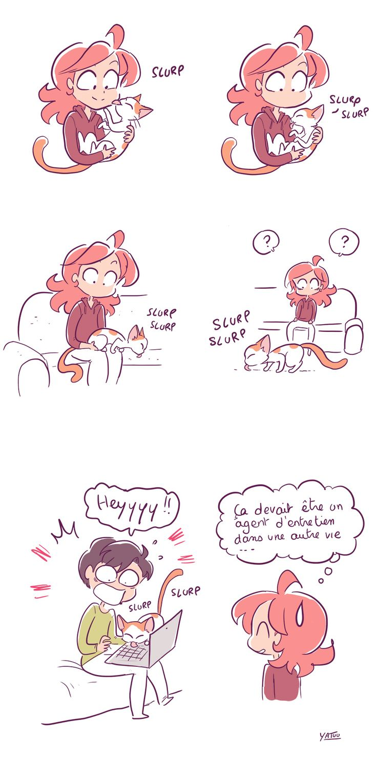 chat qui lèche