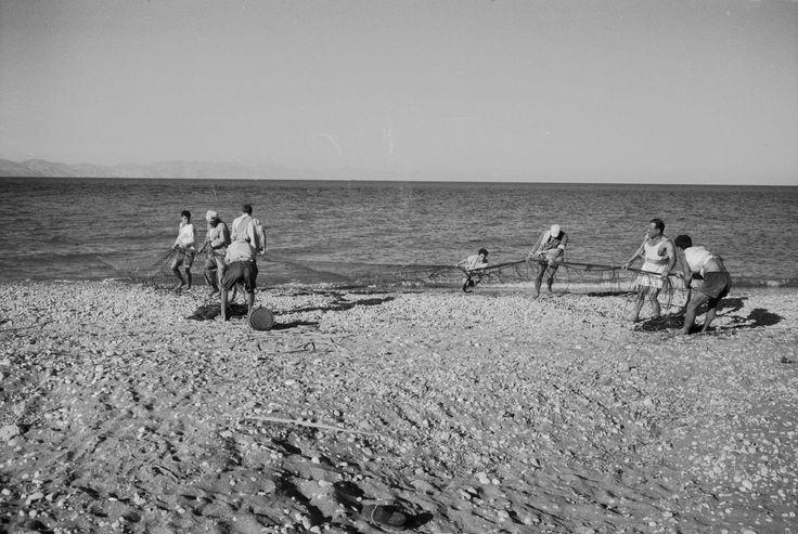 ΡΟΔΟΣ 1959 φωτ METZGER JACK