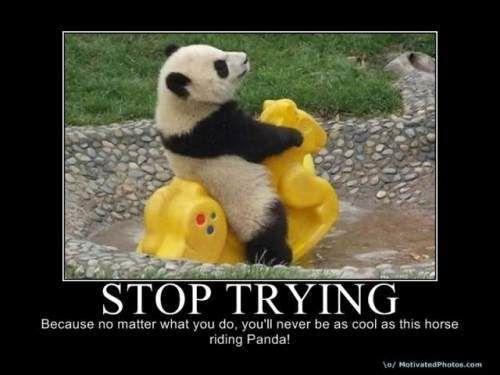 : Pandas Baby, Baby Pandas,  Pandas Bears, Rocks Hors, Funny,  Ailuropoda Melanoleuca,  Coon Bears, Giant Pandas, Animal