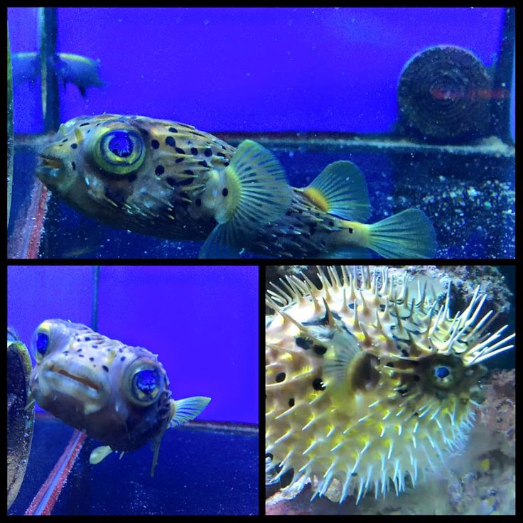 32 Best Images About Zeeaquarium On Pinterest