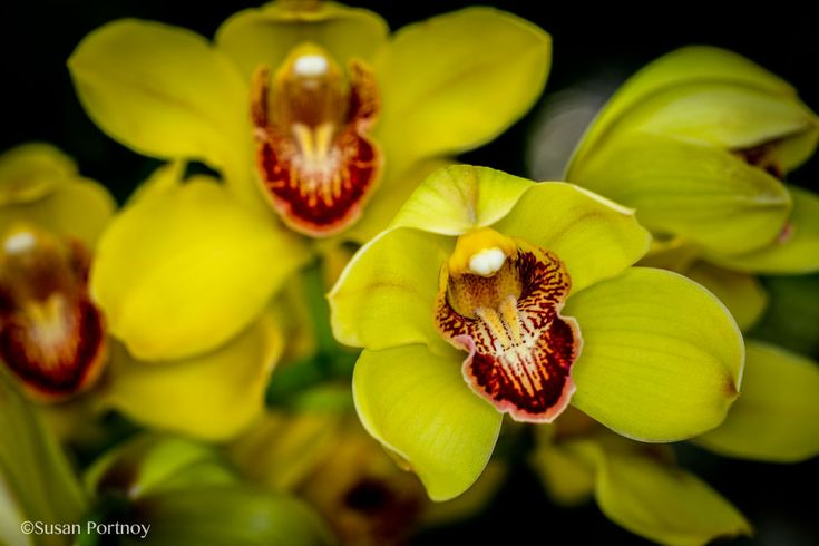 The NY Botanical Garden's Orchid Show: Thailand. Don't miss it.
