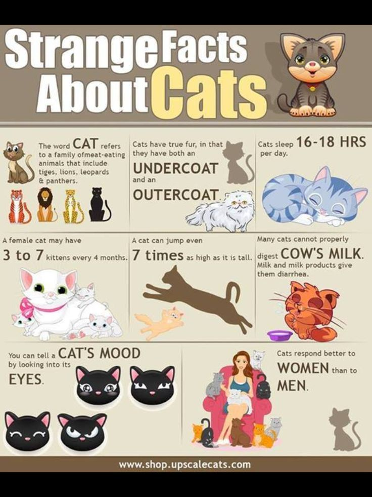 Facts about cats you maybe did not know about
