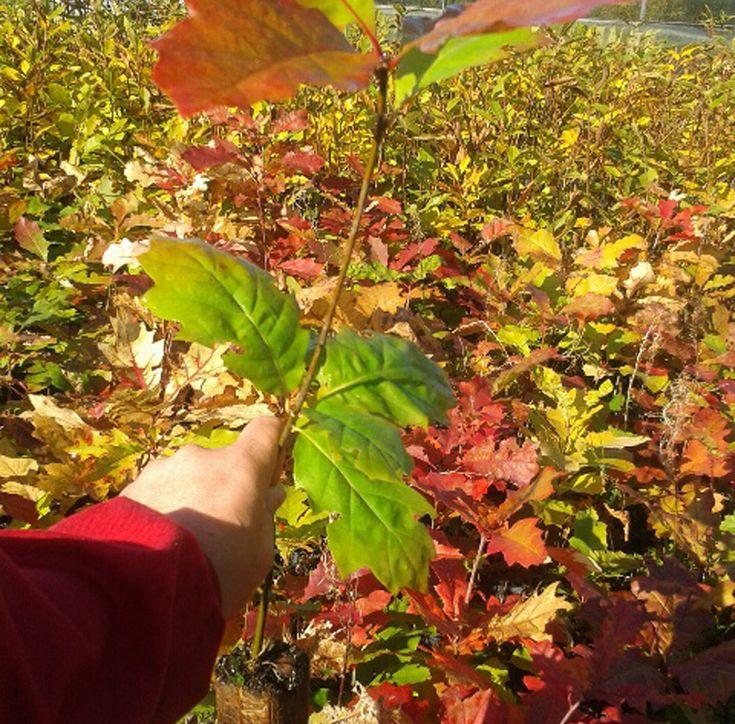 Mejores 15 im genes de planta forestal en pinterest for Viveros ourense