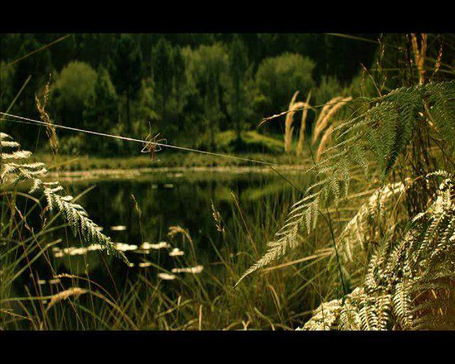 FILM: Żubr.