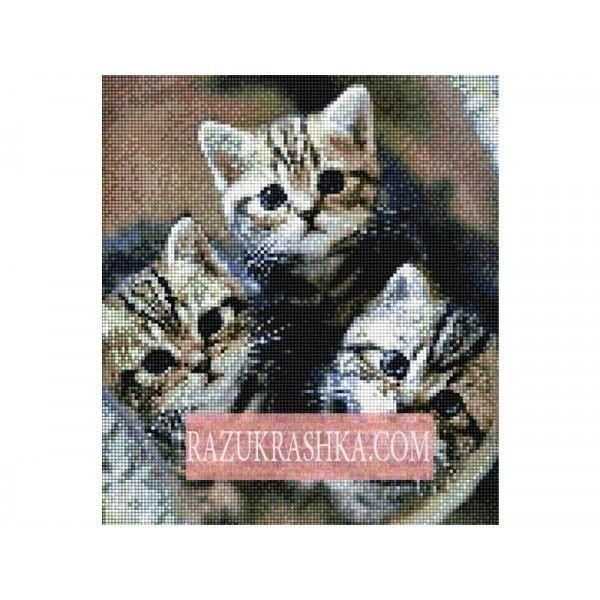 Алмазная вышивка Anya «Очаровательные котята». Купить за 1090 р. в магазине Разукрашка.