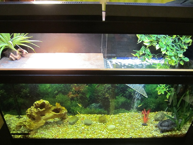 how to set up a red eared slider tank
