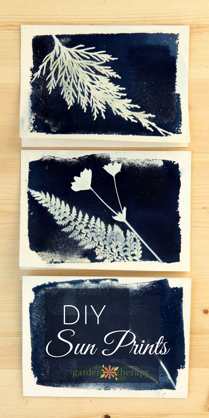 How to make sun prints. Preserve leaves and flowers from your garden with sun print cards using this traditional photography process that produces a brilliant blue print!