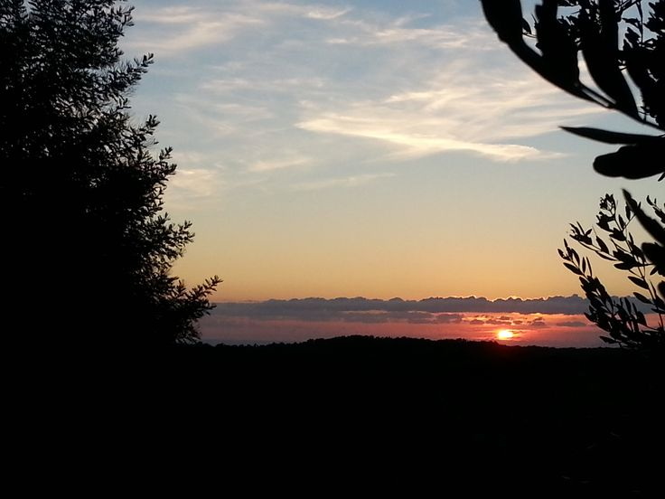 tramonto tra gli olivi